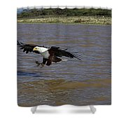 Aigle Pecheur Dafrique Haliaeetus Shower Curtain