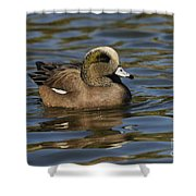 American Widgeon Shower Curtain