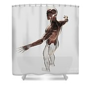 Anatomy Of Male Muscles In Upper Body Shower Curtain
