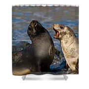 Antarctic Fur Seals Shower Curtain