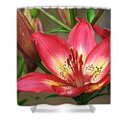 Arsenal Lily Shower Curtain