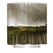 Aspen Trees In Vail Shower Curtain