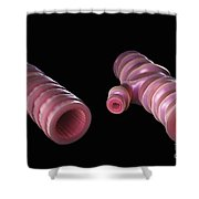 Asthmatic Bronchiole Shower Curtain