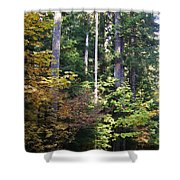 Autumn 8 Shower Curtain