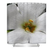 Bacopa Named Snowtopia Shower Curtain