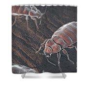 Bed Bugs Cimex Lectularius Shower Curtain