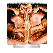Bedbug Mouthparts, Sem Shower Curtain