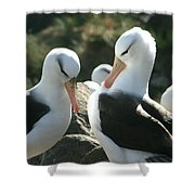 Black Browed Albatross Pair Shower Curtain