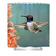 Black-chinned Hummingbird Shower Curtain