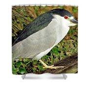 Black-crowned Night-heron Shower Curtain