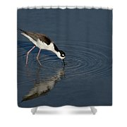 Black Necked Stilt Shower Curtain