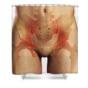 Bones Of The Pelvis Shower Curtain