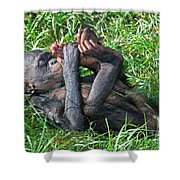 Bonobo Baby Shower Curtain