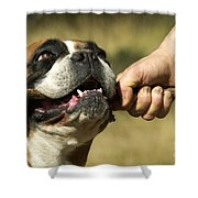 Boxer Dog Shower Curtain by Jean-Michel Labat
