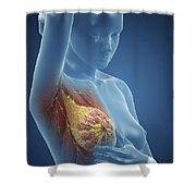 Breast Examination Shower Curtain