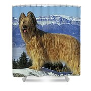 Briard Dog Shower Curtain by Jean-Michel Labat