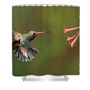 Broad Billed Hummingbird Shower Curtain