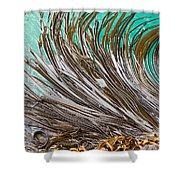 Bull Kelp Blades On Surface Background Texture Shower Curtain