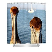 California Pelicans Shower Curtain