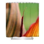 Canna Lily Named Durban Shower Curtain
