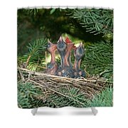 Cedar Waxwings Shower Curtain by Linda Freshwaters Arndt