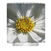 Cosmos Named Sensation Alba Shower Curtain