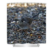 Dark Eyed Junco Shower Curtain