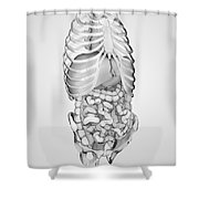 Digestive System And Bones Shower Curtain