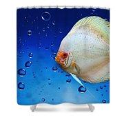 Discus Fish Shower Curtain