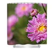 Double Click Cosmos Named Rose Bonbon Shower Curtain