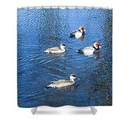 4 Duck Pond Shower Curtain