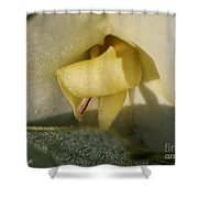 Dwarf Canna Lily Named Ermine Shower Curtain