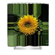Dwarf Sunflower Named Teddy Bear Shower Curtain
