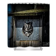 Eastern Screech Owl  Shower Curtain