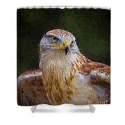 Ferruginous Hawk Shower Curtain