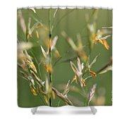 Flowering Brome Grass Shower Curtain