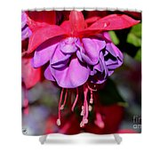 Fuchsia Named Dark Eyes Shower Curtain