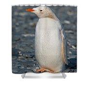 Gentoo Penguin Shower Curtain