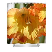 Gladiolus Named Halloween Shower Curtain
