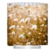 Golden Field Shower Curtain