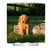 Golden Retriever Puppies Shower Curtain by Linda Freshwaters Arndt