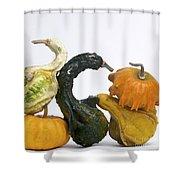 Gourds And Pumpkins Shower Curtain