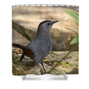 Gray Catbird Shower Curtain