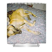 Great Dane And Calico Cat Shower Curtain
