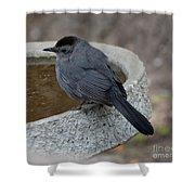 Grey Catbird Shower Curtain
