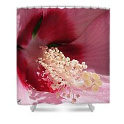 Hibiscus Moscheutos Named Luna Pink Swirl Shower Curtain