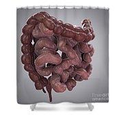 Human Intestines Shower Curtain