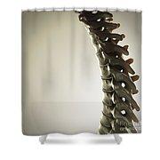 Human Spinal Bones Shower Curtain