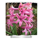 Hyacinth Named Pink Pearl Shower Curtain