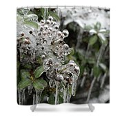 Ice  Shower Curtain